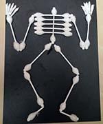 Скелет на английском языке. Часть3