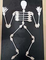 Скелет на английском. Часть 4