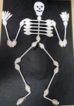 Скелет на английском языке. Часть 5
