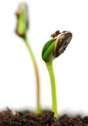 семена по-английски